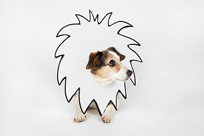 Little dog with drawn lion's mane - p300m2121884 by Petra Stockhausen