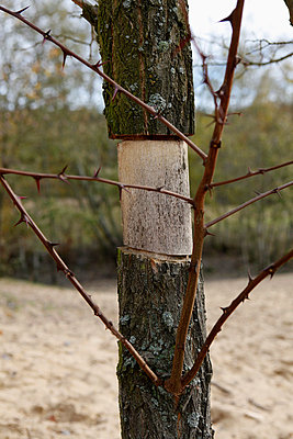 A thorny tree missing a piece of bark - p301m744419f by Marc Volk