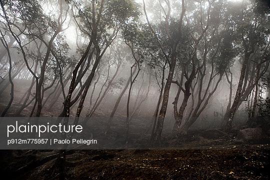 p912m775957 von Paolo Pellegrin