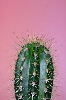 Kaktus    - p450m1582953 von Hanka Steidle