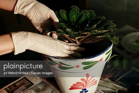 Crop gardener planting flower in colorful pot - p1166m2191844 by Cavan Images