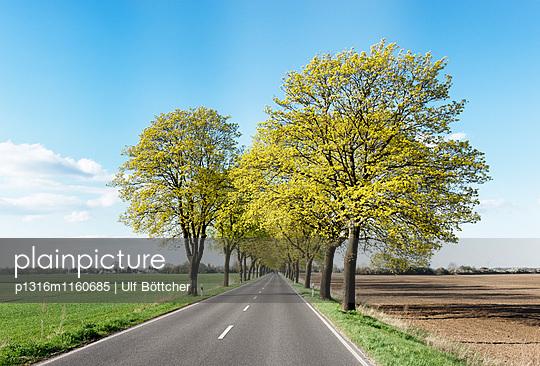 Baumallee bei Rathstock, zwischen Frankfurt/Oder und Küstrin, Märkisch-Oderland, Land Brandenburg, Deutschland - p1316m1160685 von Ulf Böttcher