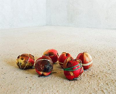 Alte Äpfel verbinden - p4530087 von Mylène Blanc