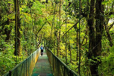 Selvatura Treetop hanging bridges, Monteverde Cloud Forest Reserve, Puntarenas, Costa Rica - p871m2032134 by Matthew Williams-Ellis