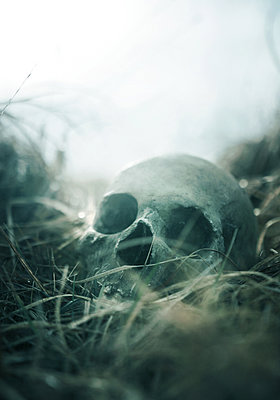 Skull - p984m1123717 by Mark Owen