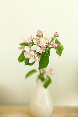 Apfelblüte - p249m1055172 von Ute Mans