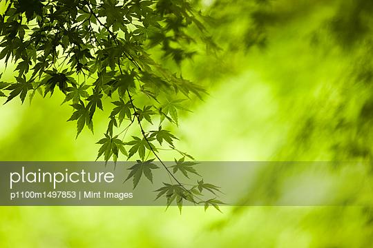 p1100m1497853 von Mint Images