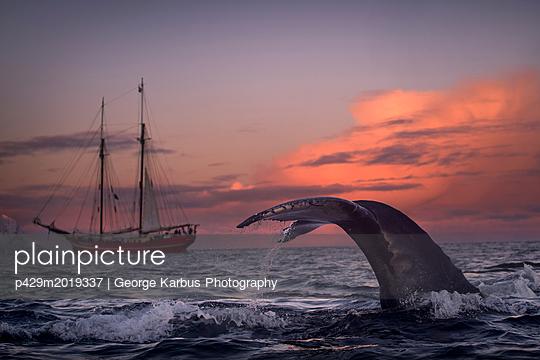 p429m2019337 von George Karbus Photography