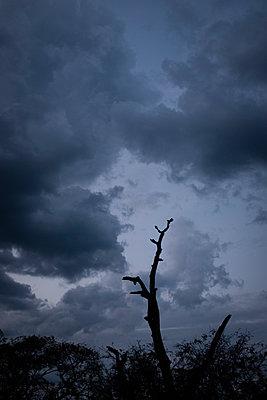 Stille am Morgen - p1509m2116741 von Romy Rolletschke