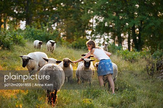 Girl stroking sheep - p312m2091855 by Anna Kern