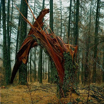 Broken tree - p1160m951349 by Emilie Reynaud