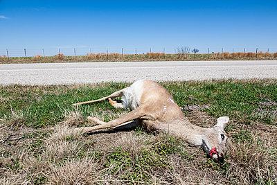 Dead Deer - p1291m1548094 by Marcus Bastel