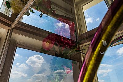 p1301m1465586 by Delia Baum