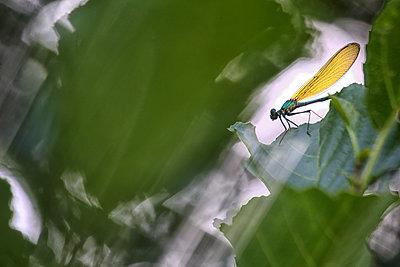 Dragonfly on leaf - p300m2079152 by David Santiago Garcia