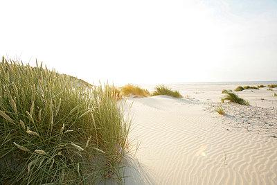Holländische Küste - p5670701 von ofoulon