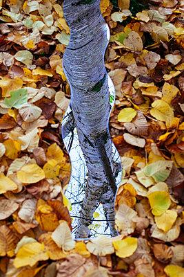 Spiegelung der Natur - p728m1193633 von Peter Nitsch