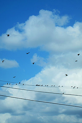 Birds in the Sky and on WIre - p1331m1169272 by Margie Hurwich