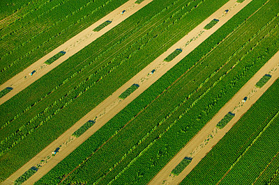 Agriculture - Aerial pattern image of mixed agricultural fields / Idaho, USA. - p442m961321 by Glenn Oakley