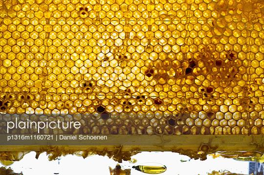 Honigwaben, Freiburg im Breisgau, Schwarzwald, Baden-Württemberg, Deutschland - p1316m1160721 von Daniel Schoenen