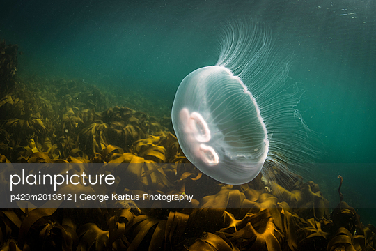 p429m2019812 von George Karbus Photography