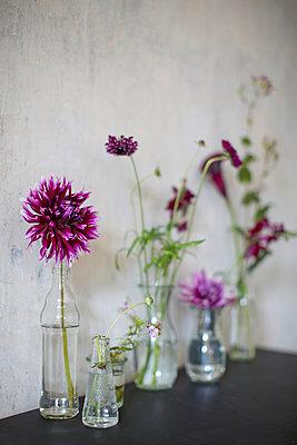 Dahlien in der Vase - p877m908103 von Julia Wagner