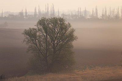 Morning - p1016m907441 by Jochen Knobloch