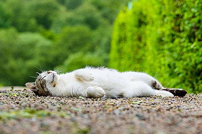 Sleeping cat - p312m2140169 by Mikael Svensson
