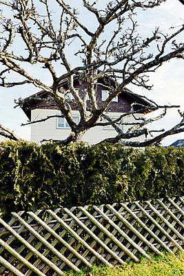 Garden fence - p248m880982 by BY