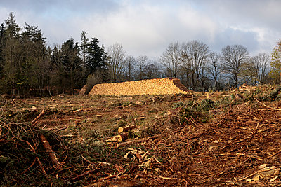 Deforested area and stacked logs - p445m1496605 by Marie Docher