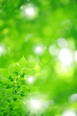 Green Leaves - p5145116f by Akira