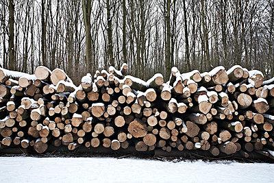 Wood - p1092m901245 by Rolf Driesen