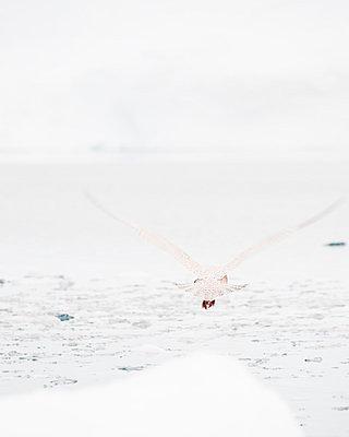 Weiß - p1117m900494 von Helen Greiner