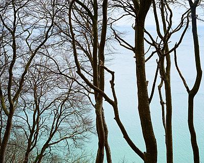 Jasmund national park - p1124m1011369 by Willing-Holtz