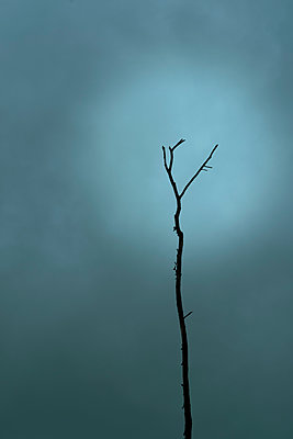 Spooky bare tree and the moon - p1228m2125010 by Benjamin Harte