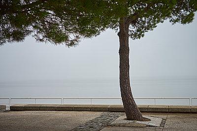 Promenade - p1312m1223661 von Axel Killian