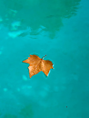 An autumn leaf in a swimming pool. - p31219923f by Johnny Franzn