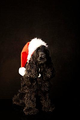 Verkleideter Hund - p5840644 von ballyscanlon