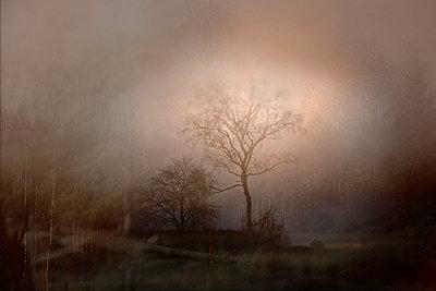 Misty landscape - p945m2178883 by aurelia frey