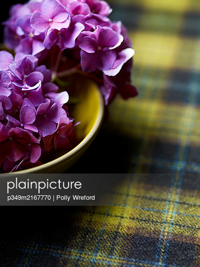 PInk hydrangeas in bowl on yellow tartan. - p349m2167770 by Polly Wreford