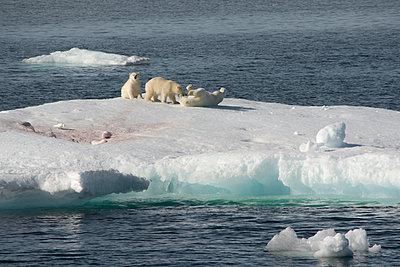 Eisbärin mit zwei Jungen - p1486m2082902 von LUXart