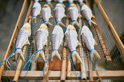 Fish drying on rack, Tai O, Hong Kong - p429m1062898 by Gu