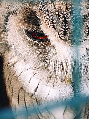 Owl's eye, close-up - p1150m2211428 by Elise Ortiou Campion