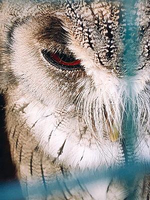 Das Auge einer Eule, Nahaufnahme - p1150m2211428 von Elise Ortiou Campion