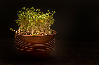 Cresses in bowl on wooden table, close up - p300m2207323 by Doris.H