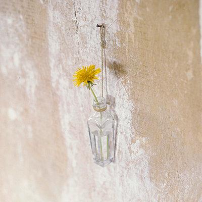 Blume in der Flasche - p3050122 von Dirk Morla