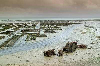 Rows of oyster beds on beach mudflats, Saint-Malo, Brittany, France - p924m1506714 by WALTER ZERLA