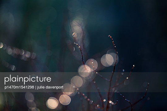 lights in the forest - p1470m1541298 by julie davenport