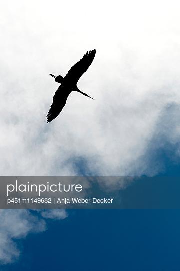 Fliegender Storch - p451m1149682 von Anja Weber-Decker
