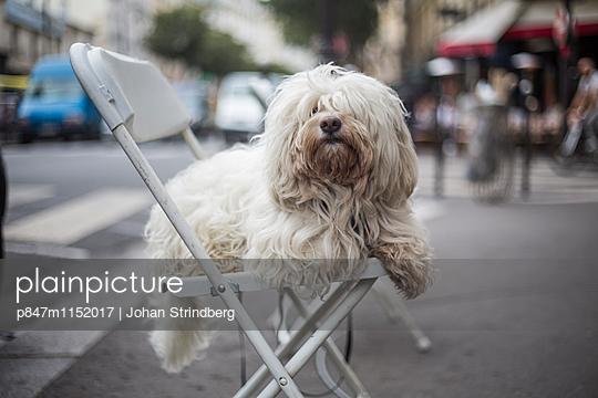 p847m1152017 von Johan Strindberg