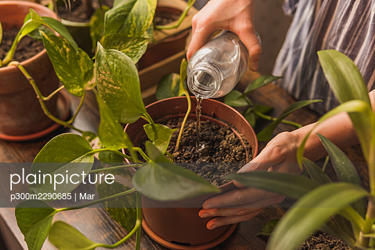 Woman watering plant at home - p300m2290685 by Mar